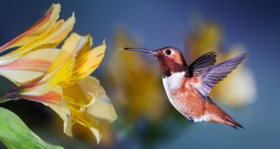Spirit Guide About Birds